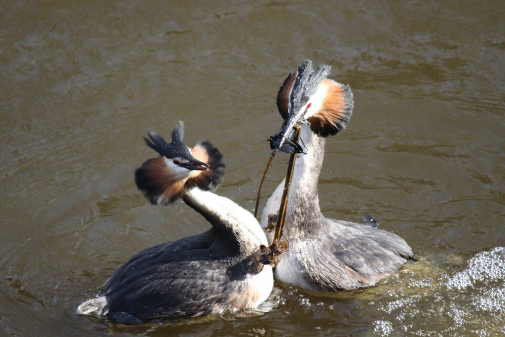 Vogels Leidschendam